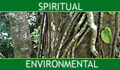 Real Spiritual and Environmental Telephone Readings - Vine Psychic