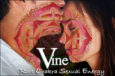 Vine Psychic Root Chakra - Base Chakra - Sexual Energy